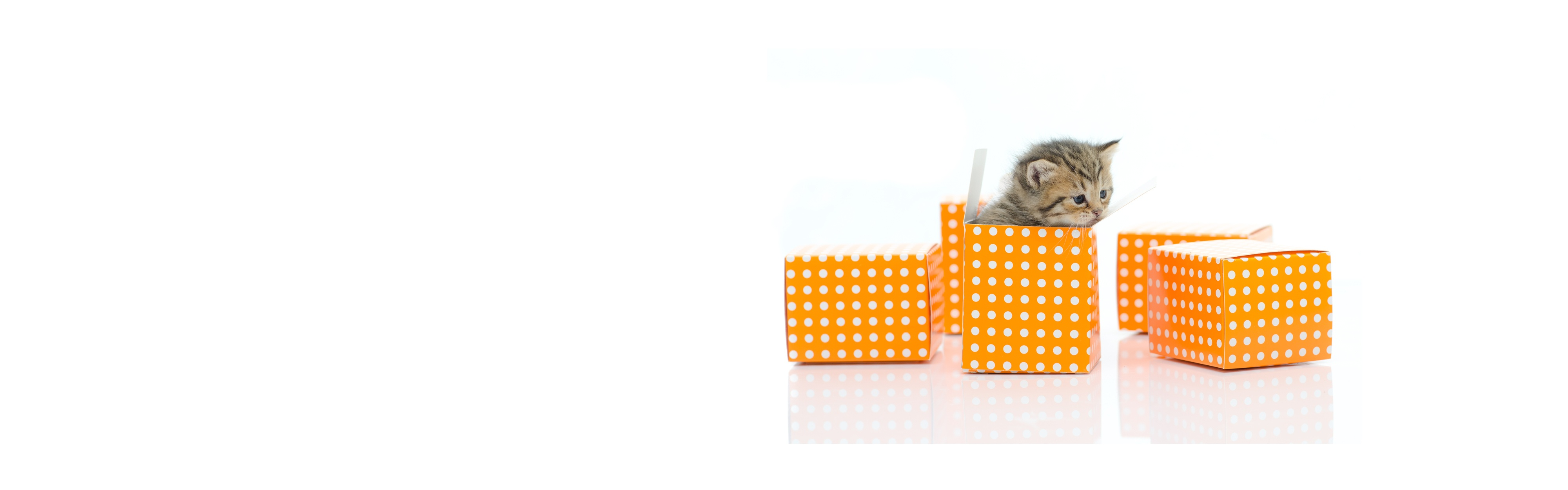 Fulfillment Page Banner 1920 x 600